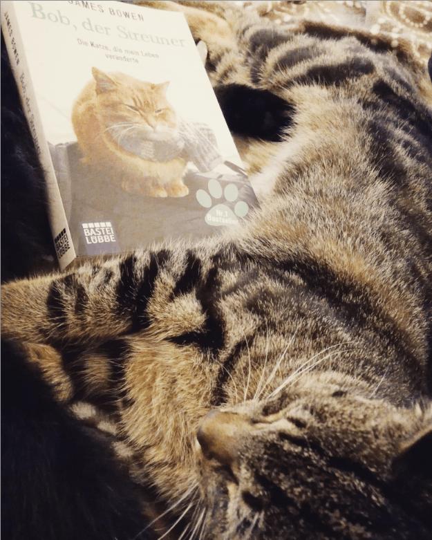 Bob, der Streuner: Die Katze, die mein Leben veränderte – James Bowen