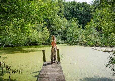 Zwischen Natur & Verwahrlosung - Steinschaler Naturgärten