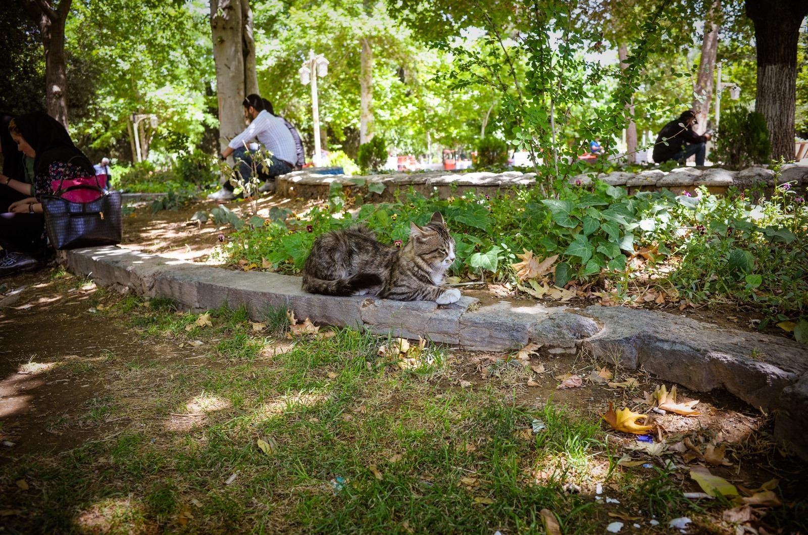 Essen im Park trotz Ramadan - Iran -Teheran